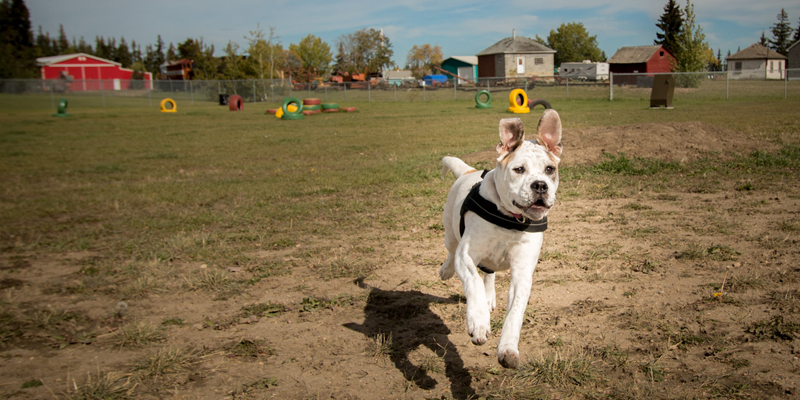 dog park users to enter through south gate